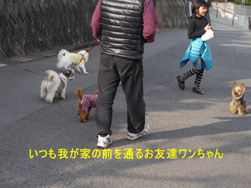 毎日の散歩は、お友達ワンちゃんたちと_b0175688_22515736.jpg