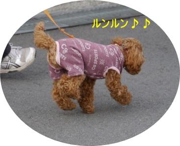 毎日の散歩は、お友達ワンちゃんたちと_b0175688_2252411.jpg