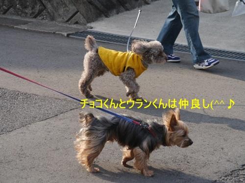 毎日の散歩は、お友達ワンちゃんたちと_b0175688_22525467.jpg