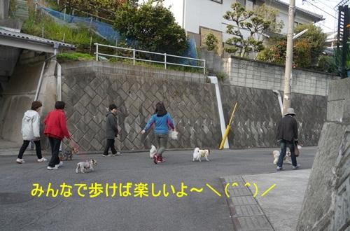 毎日の散歩は、お友達ワンちゃんたちと_b0175688_22534979.jpg