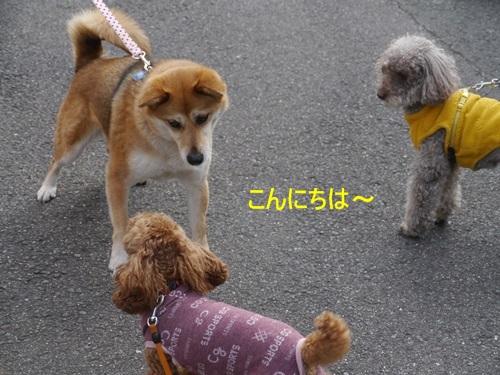毎日の散歩は、お友達ワンちゃんたちと_b0175688_22572176.jpg