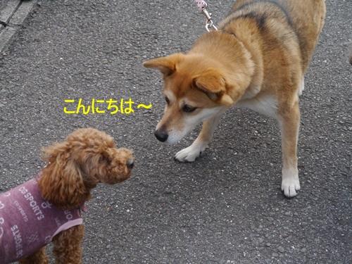 毎日の散歩は、お友達ワンちゃんたちと_b0175688_22575074.jpg