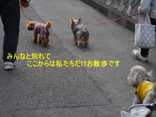 毎日の散歩は、お友達ワンちゃんたちと_b0175688_225992.jpg