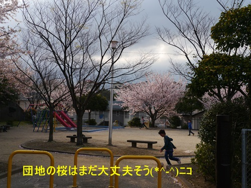 毎日の散歩は、お友達ワンちゃんたちと_b0175688_2302100.jpg