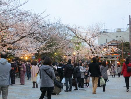 桜は満開近し〜_c0108595_402851.jpg
