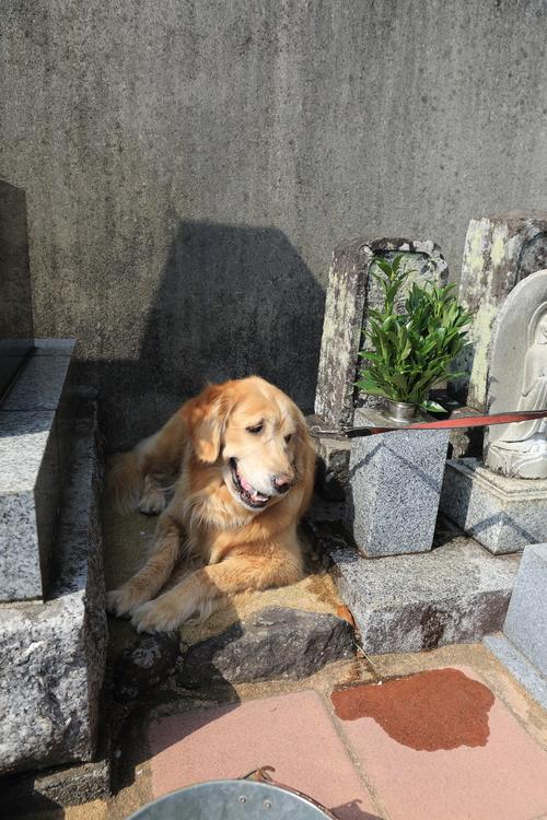 お墓参り_b0275998_959571.jpg