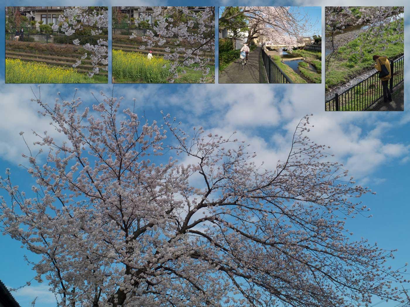 桜・夜桜_a0271402_19201298.jpg