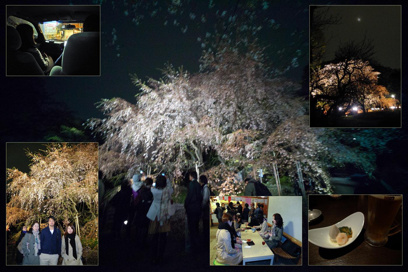 桜・夜桜_a0271402_19204368.jpg