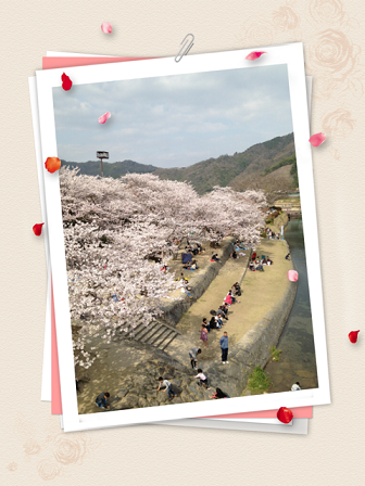 cherry blossoms*_c0166506_22281643.png