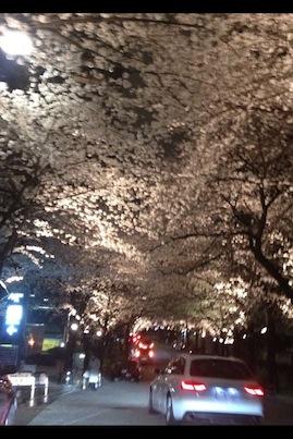 夜桜_d0287712_2241217.jpg