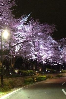 夜桜_d0287712_2244249.jpg