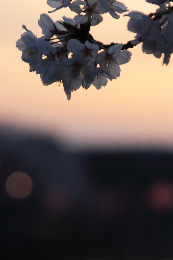 d0166115_13155731.jpg