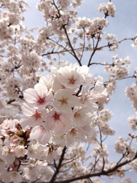 《春 Spring》!_e0103327_12344848.jpg