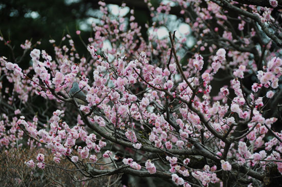 梅に...(2)_c0093046_7565125.jpg