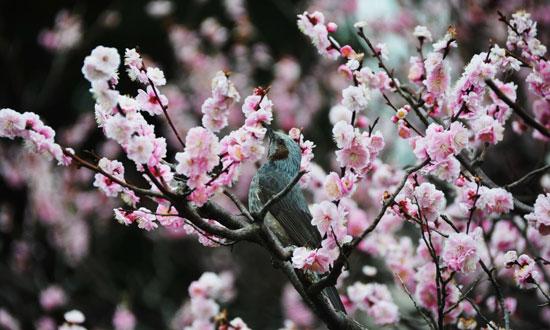 梅に...(2)_c0093046_7574953.jpg