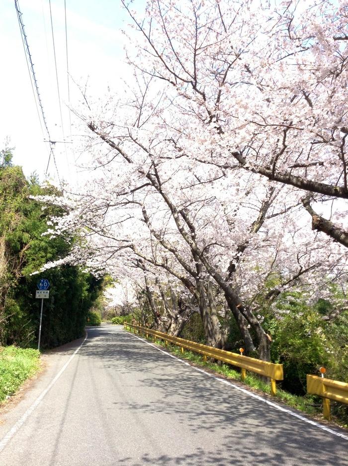 五条の千本桜_f0183846_222451.jpg
