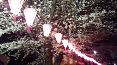 桜まだ見頃_a0098948_17164485.jpg