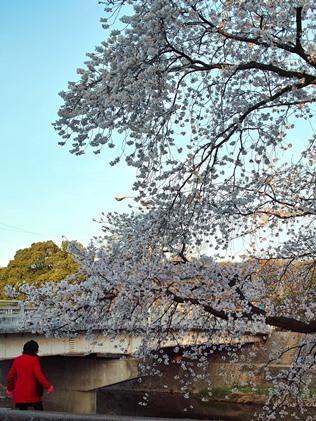 琵琶湖一周めぐり・・・・年度始め_d0005250_19464399.jpg