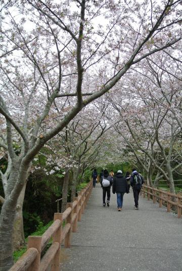 桜_d0143957_16575054.jpg