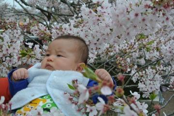 桜_d0143957_16581087.jpg