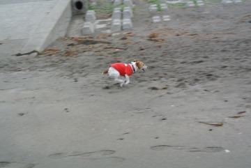舞い上がる犬とクレソン_d0143957_171522100.jpg