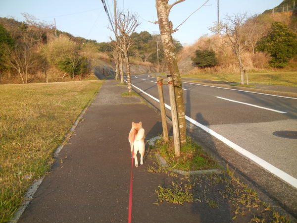 '13,4,1(月)田舎道も春爛漫!_f0060461_10464297.jpg