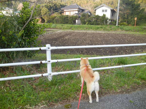 '13,4,1(月)田舎道も春爛漫!_f0060461_10544677.jpg