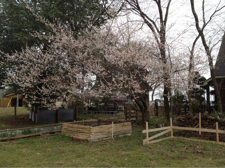 秘密基地に春が来た_e0244283_1417533.jpg