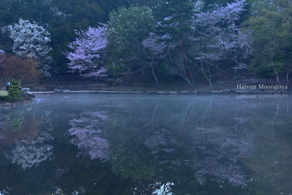 春の宵_b0208495_2234767.jpg