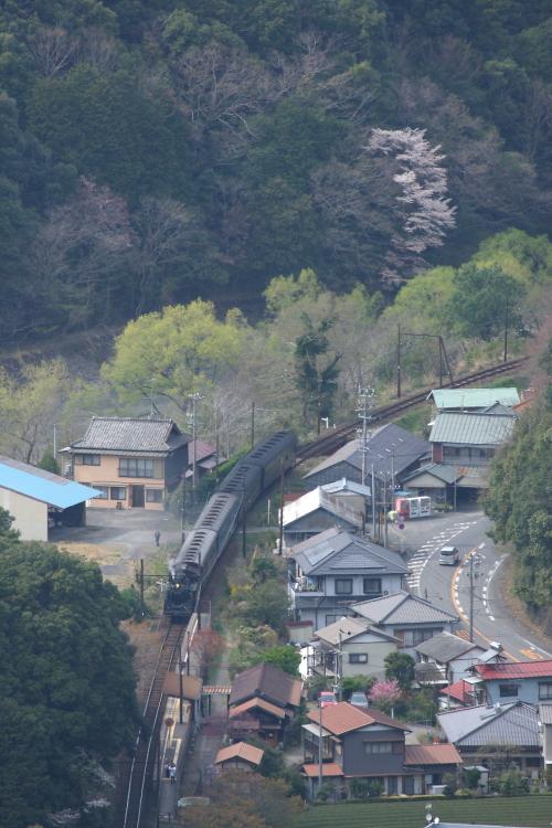 春の里の駅 - 2013年桜・大井川 -  _b0190710_235943.jpg