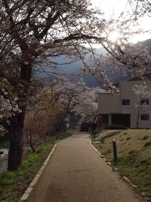 湯来ロッジ周辺の桜_c0116915_23132277.jpg