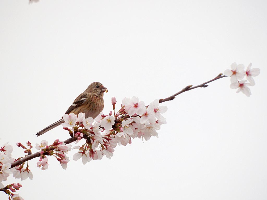 3/31 S公園にて_f0051915_23575029.jpg