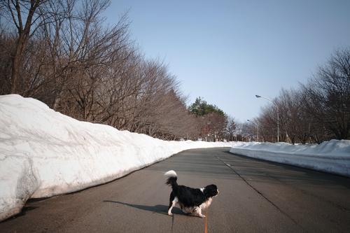 本日は今年の最高気温だった。_c0051132_210137.jpg