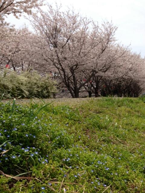 お花見日和🎶_f0277245_0254310.jpg
