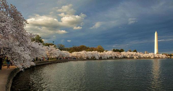 一度ワシントン・ポトマック川の桜を見に行きたいと思っているが、ずっと実... ワシントン・ポトマ