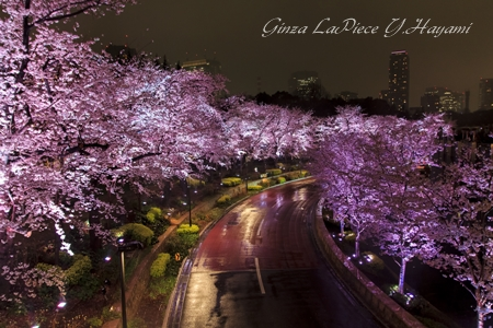 花のある風景 桜の季節 大雨満開桜夜景_b0133053_0205449.jpg