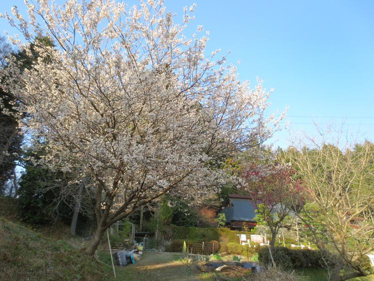 5年目の春_d0231263_0205681.jpg
