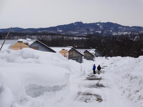 山手の農場はまだまだ雪が多いです_e0266363_13284930.jpg