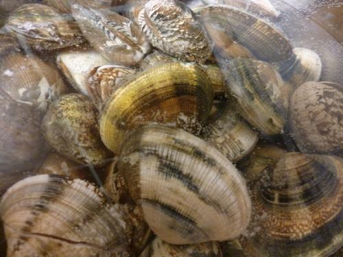 貝が美味しいですね。_e0252966_1385075.jpg