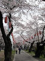 2013/4/1  今月のお休み_e0245899_145233.jpg