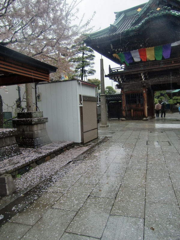 4月3日  無情な雨・・・_d0278912_22531362.jpg