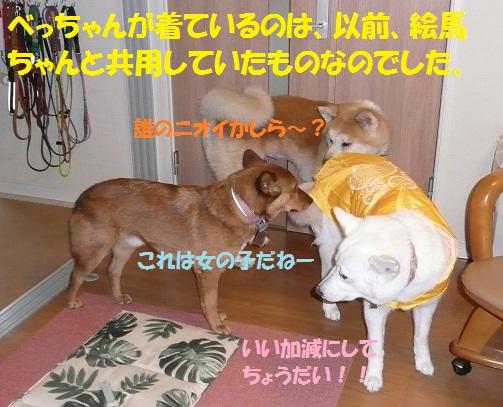f0121712_13393095.jpg