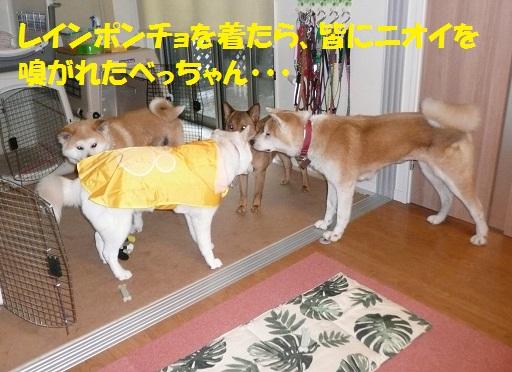 f0121712_1339326.jpg
