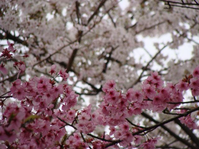 京都 北野界隈散策_f0223914_9201851.jpg