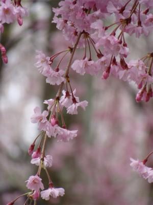京都 北野界隈散策_f0223914_9291787.jpg
