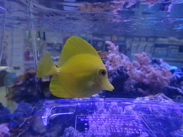 130403 海水魚・サンゴ・侘び草・水草・淡水魚_f0189122_1237017.jpg