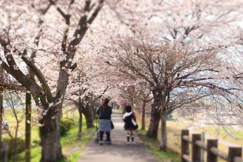 カンナちゃん 初お花見。_c0148232_19402362.jpg