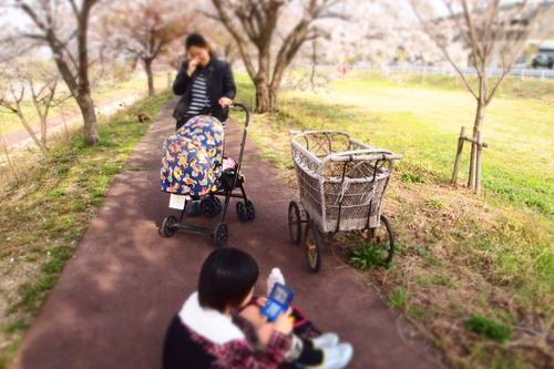 カンナちゃん 初お花見。_c0148232_19404475.jpg