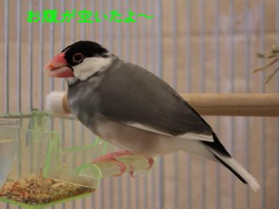 b0158061_2011308.jpg