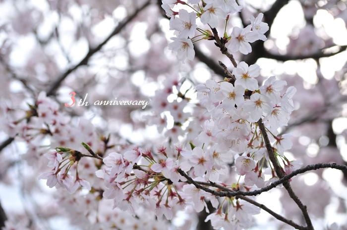 3周年 & 桜_f0234062_22471271.jpg